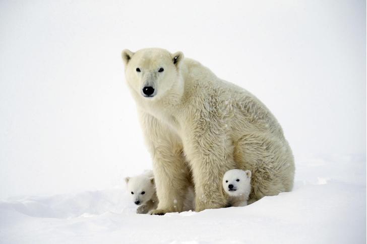 Фото №1 - Медвежата впервые вышли из берлоги