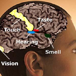 Фото №1 - Активность мозга подвергается магнитной стимуляции