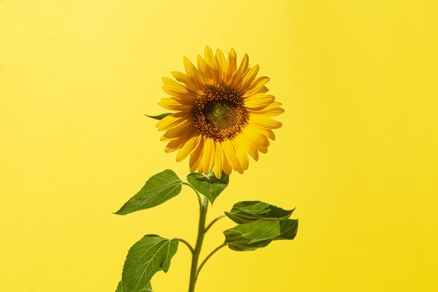 Фото №6 - Узнай, какой ты цветочек по дате рождения