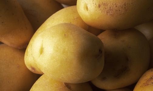 Фото №1 - Россельхознадзор вводит запрет на поставку в РФ картофеля из Египта