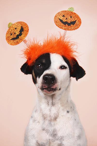 Фото №5 - Фотоподборка недели: собаки, которые уже готовы к Хэллоуину