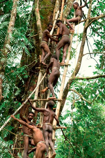 Фото №6 - Высшее общество: индонезийское племя короваи