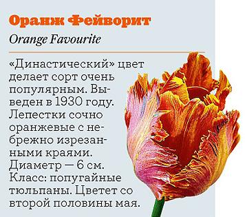Фото №12 - Самые популярные сорта тюльпанов