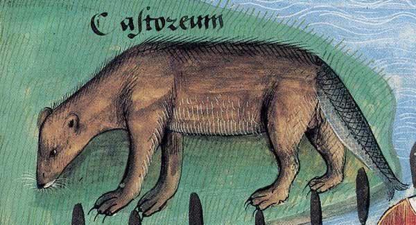 Фото №19 - Как в старину художники изображали животных, которых никогда не видели (25 странных существ)