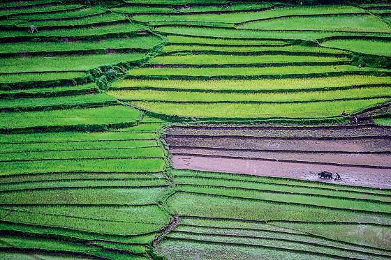 Фото №5 - Свобода под надзором: репортаж из Бутана