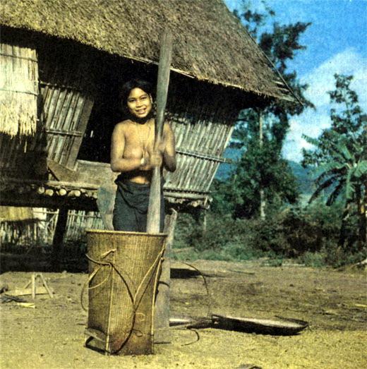 Фото №4 - С Дерсу по вьетнамским джунглям
