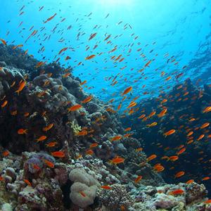Фото №1 - Перепись подводного мира