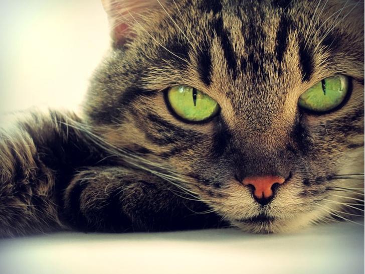 Фото №1 - Ученые рассказали, почему кошки предпочитают одиночество