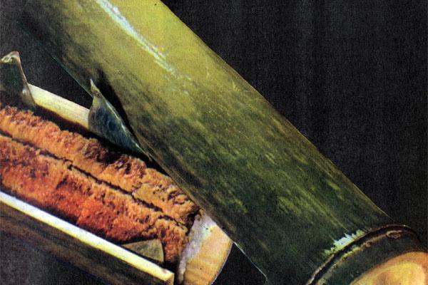 Фото №1 - Скромные шедевры цуцуму