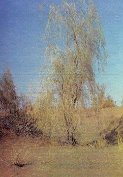 Фото №2 - Солнечный ветер