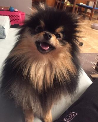 Фото №7 - Милоты пост: любимые собачки знаменитостей 🐶⭐