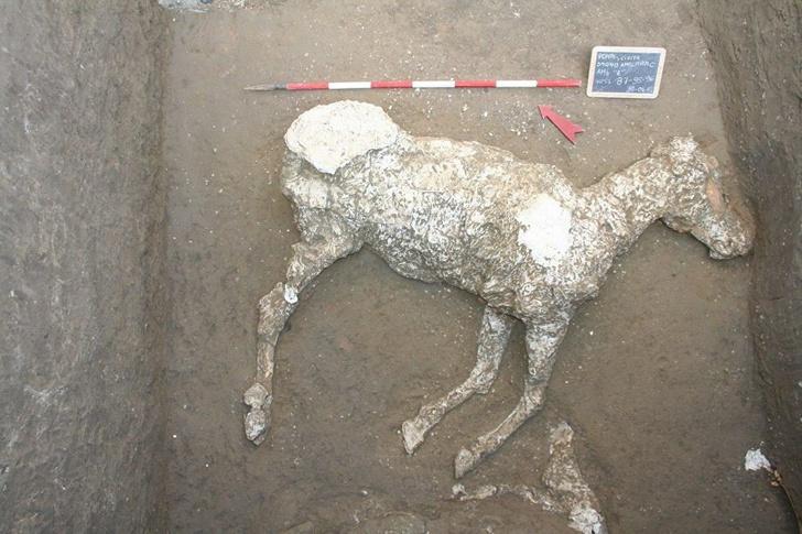 Фото №1 - В Помпеях обнаружена новая жертва извержения Везувия