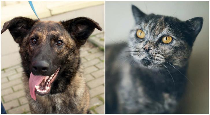 Фото №1 - Котопёс недели: кошка Соня и собака Боня