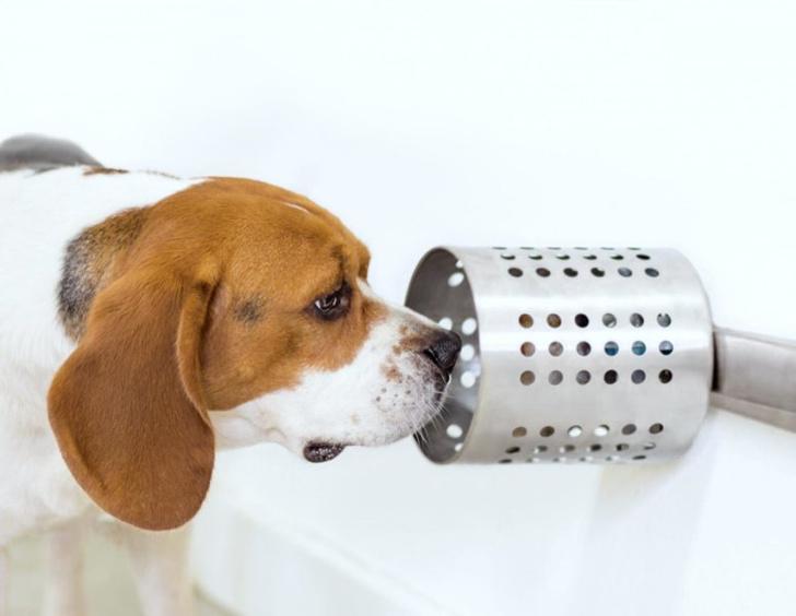 Фото №1 - Собаки способны обнаружить рак