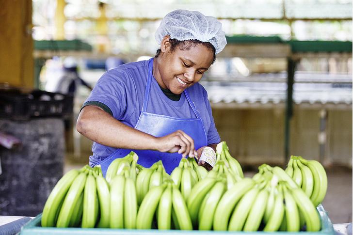 Фото №3 - Рабочий момент: банановый рай