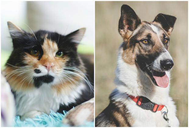 Фото №1 - Котопёс недели: возьми из приюта кошку Кармелиту или пса Милана