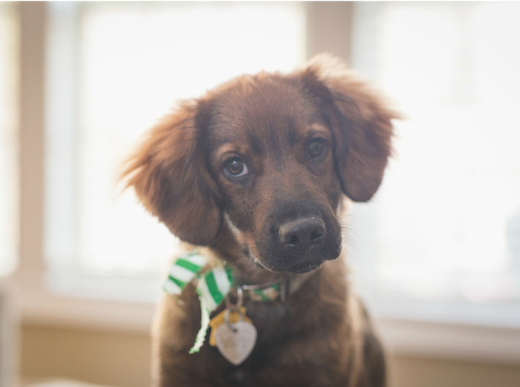 Фото №1 - Твори добро: как помочь животному из приюта