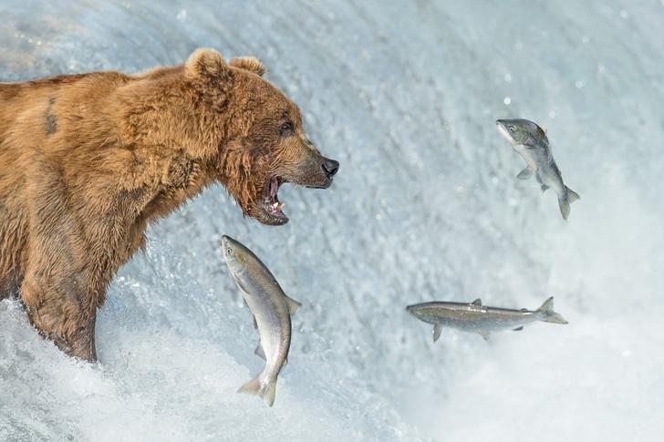 Фото №1 - В Москве и Санкт-Петербурге пройдет крупнейший фестиваль дикой природы «Золотая Черепаха»
