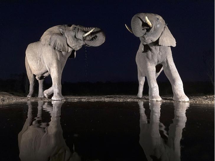 Фото №1 - Ночной водопой