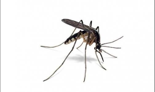 Фото №1 - Всем лето хорошо, только не комарами