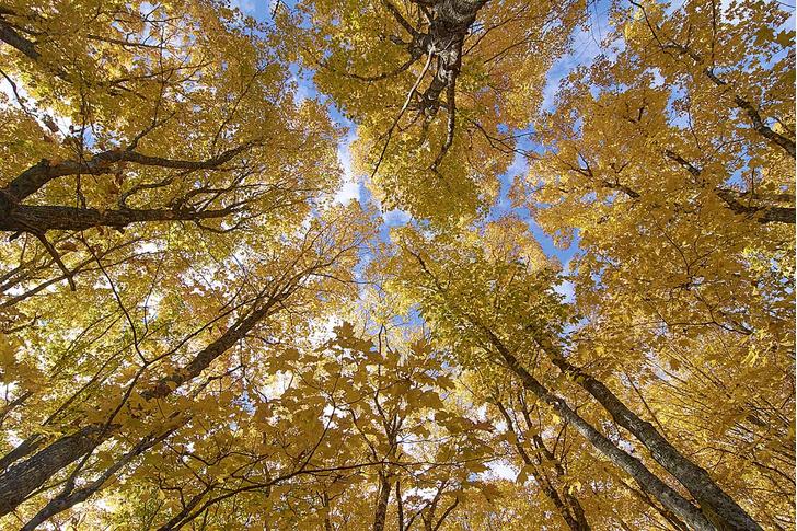 Фото №3 - Здравствуй, дерево! Тайная жизнь растений