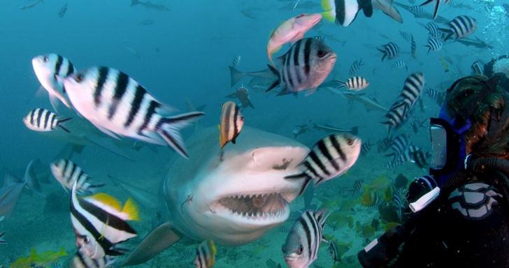 Фото №4 - Челюсти в фокусе: 5 нападений акул, которые потрясли мир