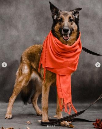Фото №2 - Котопёс недели: возьми из приюта собаку Тростинку или кошку Стешу