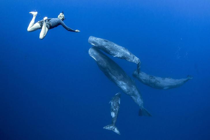 Фото №1 - Погружение с китами