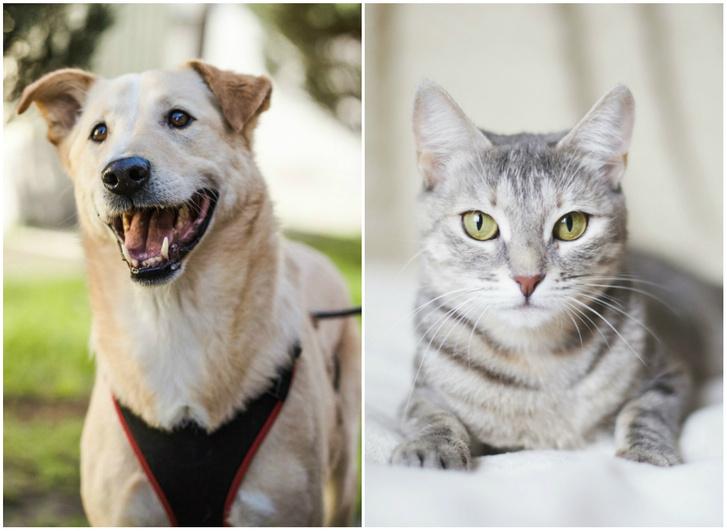 Фото №1 - Котопёс недели: возьми из приюта пса Буми или кошку Аришу