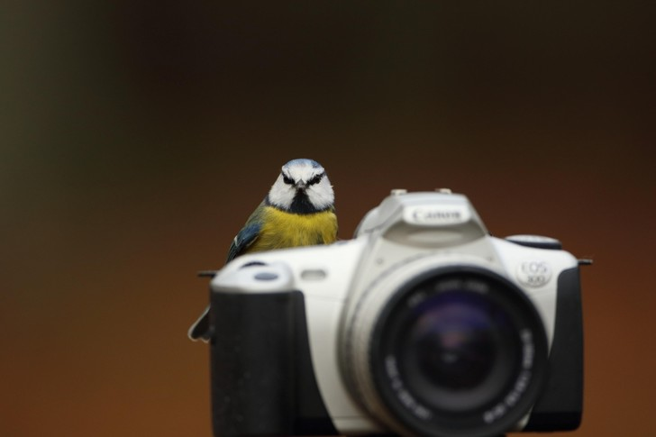 Фото №1 - Улыбнитесь, сейчас вылетит птичка