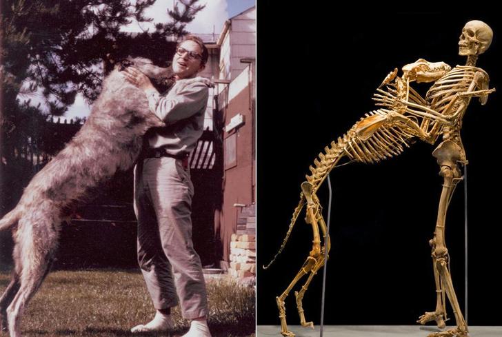 Фото №1 - 12 фактов о скелете