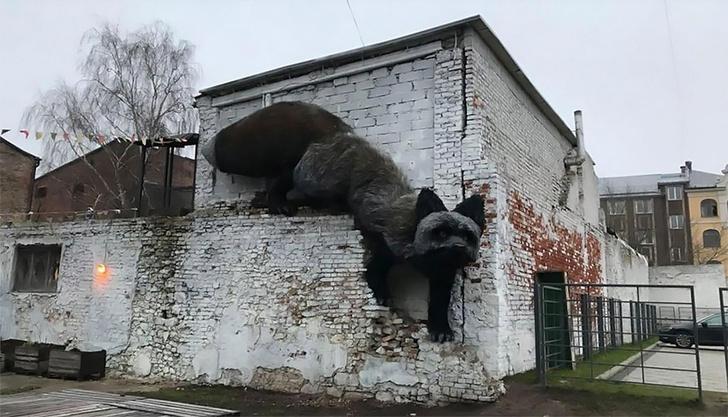 Фото №1 - По стенам Риги ползает гигантская лиса