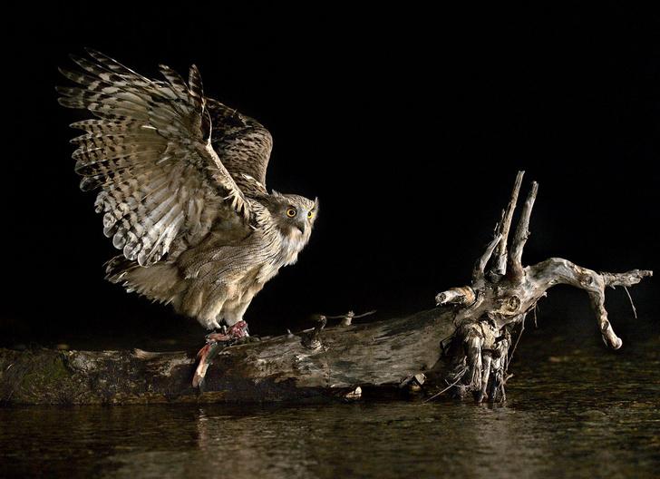 Фото №5 - Международный конкурс фотографий дикой природы «Золотая черепаха»