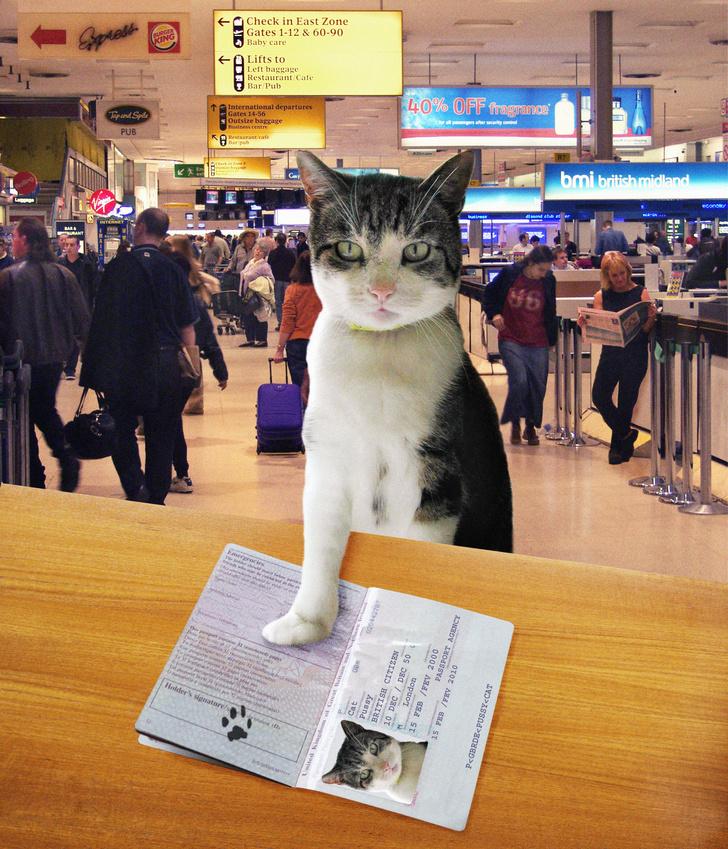 Фото №1 - Замурчательные компаньоны: коты-путешественники