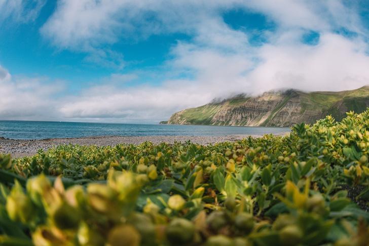 Фото №1 - Командорские острова: край мира или рай на земле?