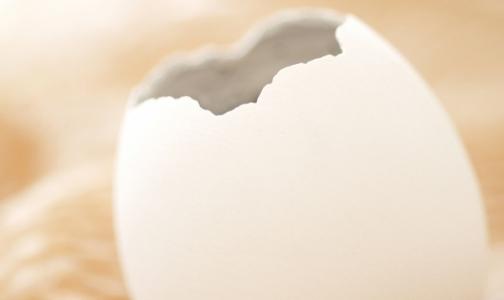 Фото №1 - В петербургских яйцах искали сальмонеллу