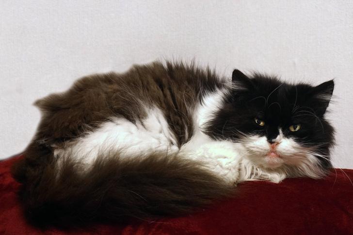 Фото №3 - Как кошки захватили мир