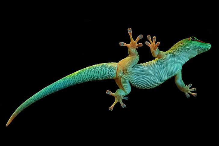 Фото №10 - Природный прототип: животные, подсказавшие идеи создателям космического оборудования