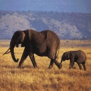 Фото №1 - Слон из пробирки
