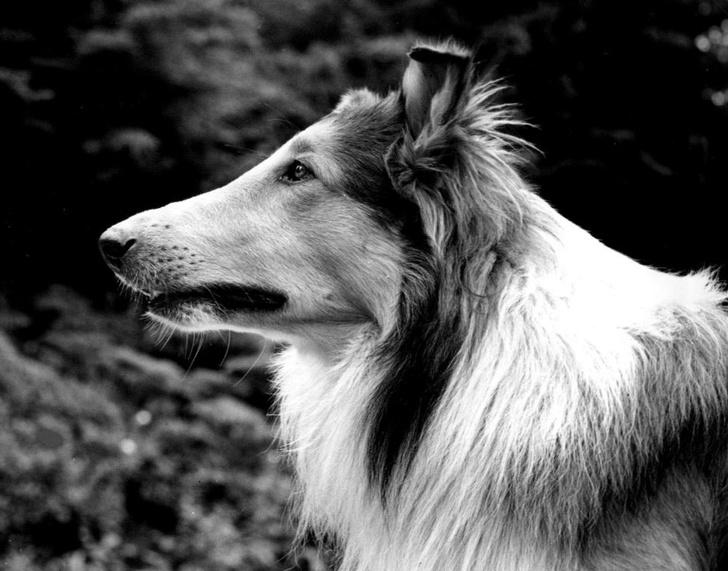 Фото №7 - Пришли к успеху: 7 животных, которые достигли в жизни большего, чем многие люди