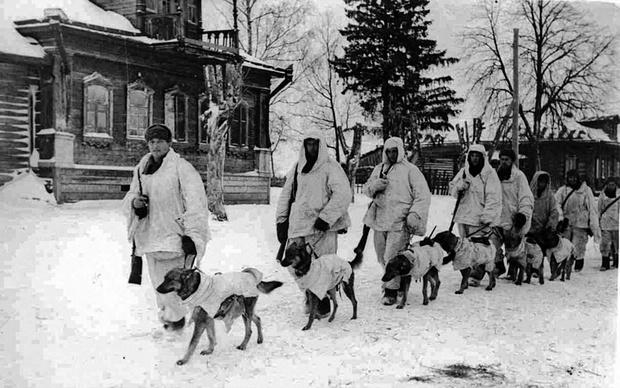 Cоветские солдаты с противотанковыми собаками.