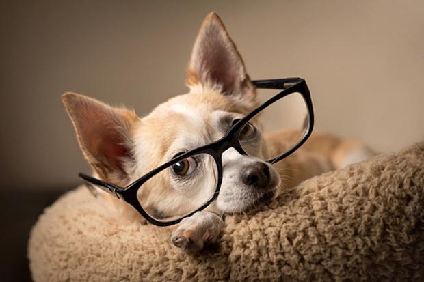 Фото №4 - Как назвать собаку: 20 эффектных кличек