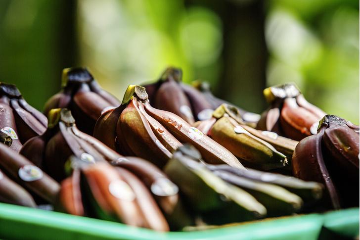Фото №1 - Рабочий момент: банановый рай