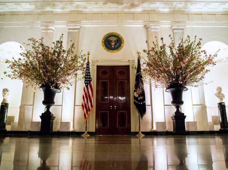 Фото №13 - Как Трамп Макрона принимал: самые яркие детали госвизита французской Первой пары в США