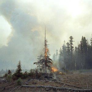 Фото №1 - Психологические тесты против лесных поджигателей