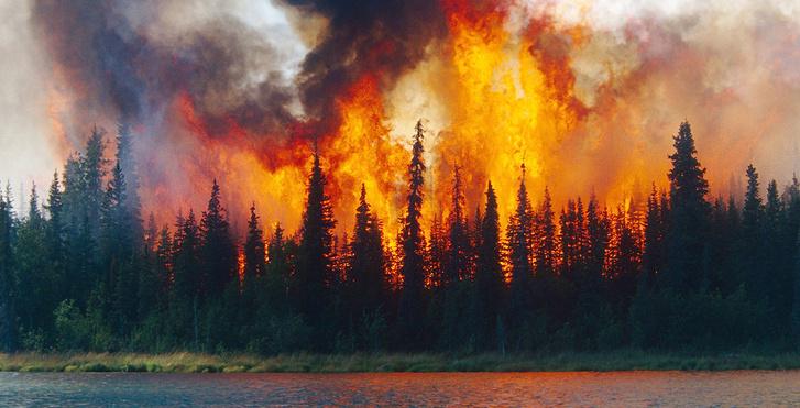 Фото №7 - Ого-гонь XXI века: еще 5 великих пожаров наших дней
