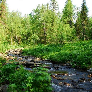 Потрясающий Вишерский заповедник – четвертый по величине в Европе – находится в Пермском крае.