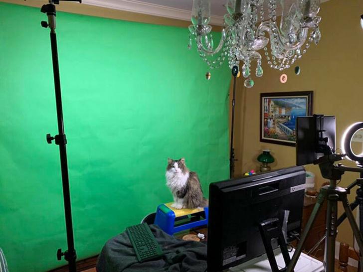 Фото №2 - Ведущий прогноза погоды ведет передачи с кошкой на руках (видео)