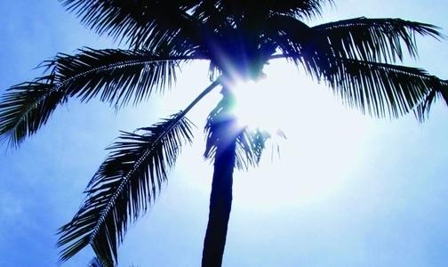 Фото №1 - Ученые изучили, насколько вредно для здоровья пальмовое масло