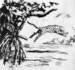 Фото №3 - Алан Кэйу. За ягуаром через сельву